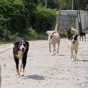Die schlimmen Schicksale der Straßenhunde