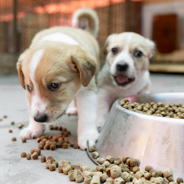 Tierhilfe Hoffnung 2