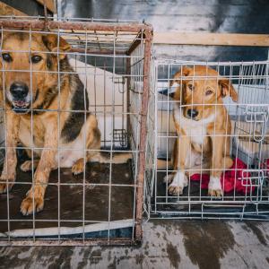 Die Hoffnung stirbt zuletzt oder: Tierschutz kennt keine Grenzen